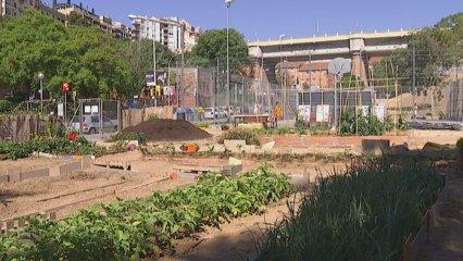 Aplec agricultura urbana