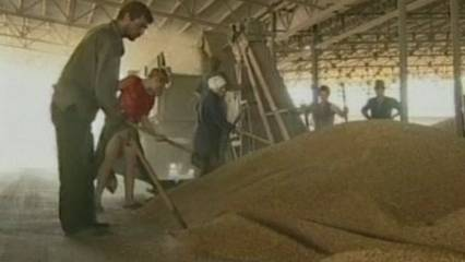 Prohibit exportar cereals a Rússia