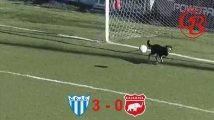 El gos que salva un gol a l'Argentina es fa viral