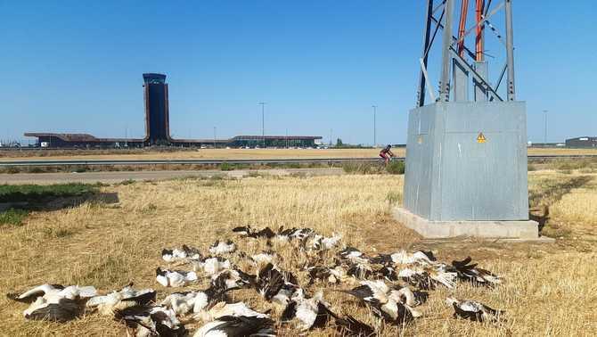 Troben 30 cigonyes mortes en una línia elèctrica a l'aeroport d'Alguaire