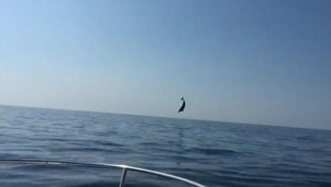 El salt del dofí a la costa del Baix Empordà