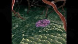Descobreixen el mecanisme que alenteix el procés de metàstasi
