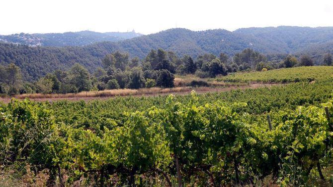 El Parc de Collserola busca pagesos per potenciar conreus i ramaderia ecològica