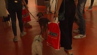 El Museu Europeu d'Art Modern (MEAM) obre les portes als gossos als Dog Days