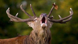 MeteoAmbient 255 – Esclata la brama del cérvol
