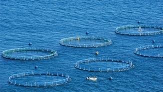 MeteoMar 261 – Present i futur de l'aqüicultura a Catalunya