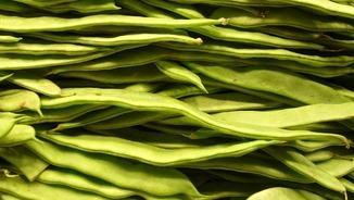 "Bajoca, mongeta, ""Phaseolus vulgaris""..."