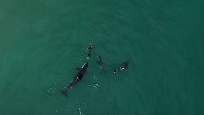 Nedant entre orques: el vídeo viral d'una dona que es veu rodejada a Nova Zelanda