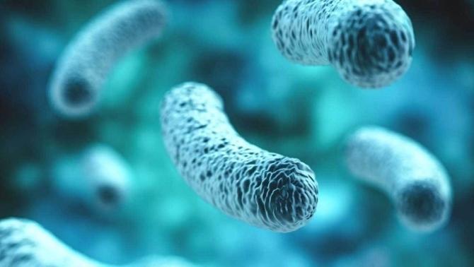 La gravetat de la Covid pot estar relacionada amb l'estat de la microbiota intestinal