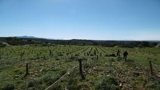 MeteoTerra 273 – Les vinyes de l'Empordà: qualitat, entorn i turisme
