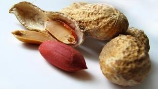 MeteoTerra 271 – Els cacauets, font de vitamines i minerals