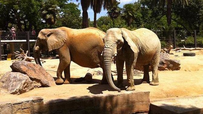 Gir al Zoo de Barcelona: reducció dràstica d'espècies i aposta per les autòctones