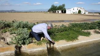 El delta de l'Ebre obre comportes per a la inundació dels camps d'arròs