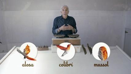 Tres tipus de persones: aloses, mussols i colibrís
