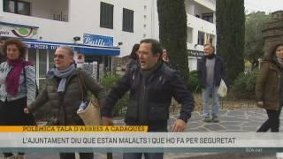 Polèmica tala d'arbres a Cadaqués