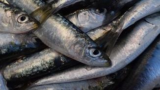 MeteoMar 302 – La sardina, recta final de la temporada